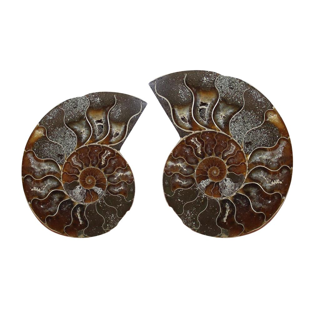 Natural Conch Fossil Pendant Necklace Rough Stone DIY Ornaments Ammonite Slices Polished Split