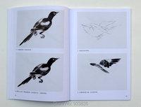 Cities живопись книга, как рисовать носок птицы кисти Шерил искусства