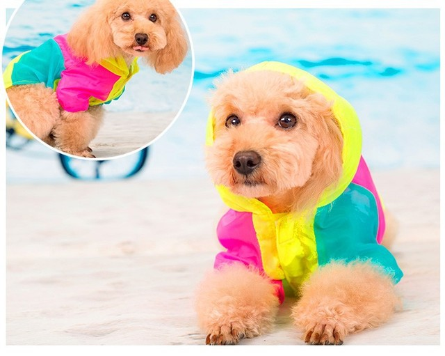 Dog's Summer Bright Clothes