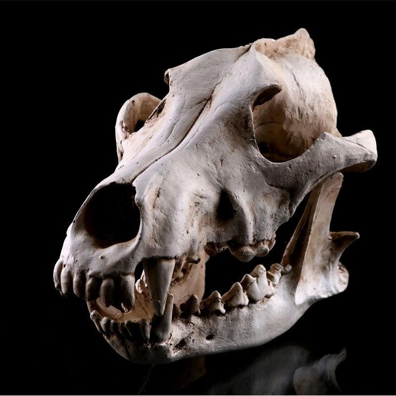 Realistic Wolves Canine Skull Model Resin Skeleton Medical ...