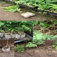 Zhenmao фрукты дерево сбор ножницы садоводство бонсай инструменты Садовые принадлежности