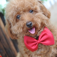 Dog Ties 15 Colors Pet Grooming Accessories Rabbit Cat Dog Bow Tie Adjustable Bowtie Multicolor Polyester 50pcs/lot Wholesale