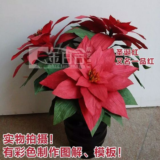 DIY Christmas gifts Poinsettia send friends and relatives Family holiday decoration potted home environment