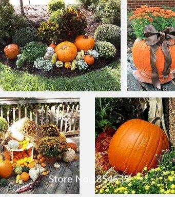 Ornamental pumpkin seeds mitral melons,Color vegetabl Q
