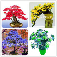 Garden Flowers Seedsplants 100 Pcs White And Pink Azalea Plantas Bonsai floresling Flowers DIY The Best Gift For The Child(China)