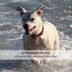 Image 5 - 800m elektryczna obroża do szkolenia psa Pet zdalnie sterowana wodoodporna ładowalna z wyświetlaczem LCD dla wszystkich rozmiarów Shock Vibration Sound