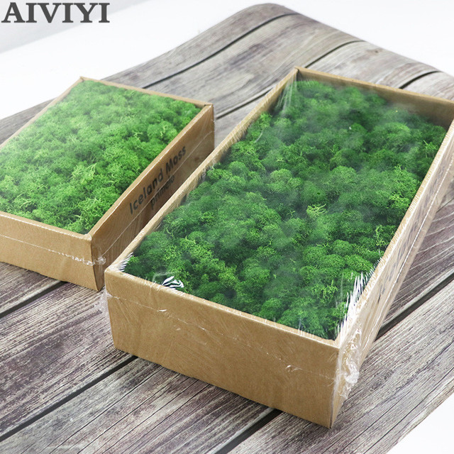 High quality artificial green plant immortal fake flower Moss grass home living room decorative wall DIY flower mini accessories 2