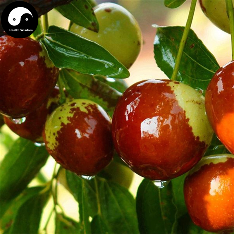 aliexpress  buy buy real ziziphus jujuba fruit tree seeds, Beautiful flower