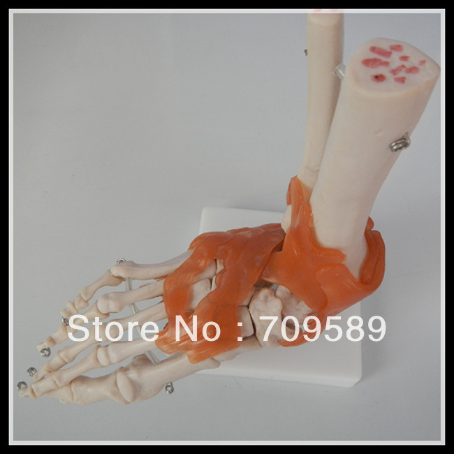 ISO Life-Size Foot Joint Model, Foot Skeleton Model, Anatomic Foot model plastic standing human skeleton life size for horror hunted house halloween decoration