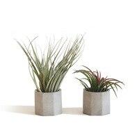 Mini etli bitkiler pot kalıpları beton saksı kalıpları silikon bahçe ekici kalıp