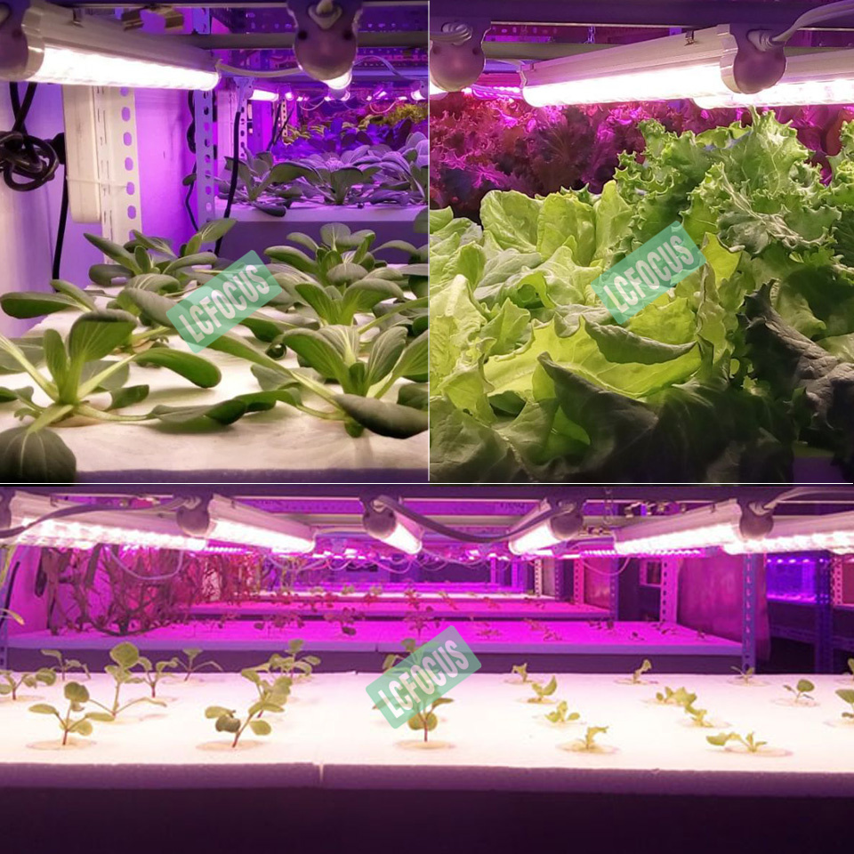 Hydroponics Nursery T8 300MM 24W Grow Light 380-840nm Full Spectrum White Grow LED AC 85-265V LED Tube For Indoor Plant Growth