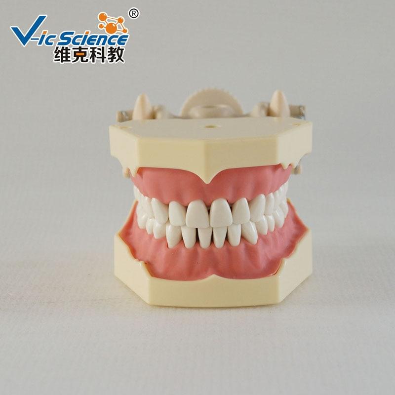 Nieuw Frasaco-model met DP Plastic Articulator