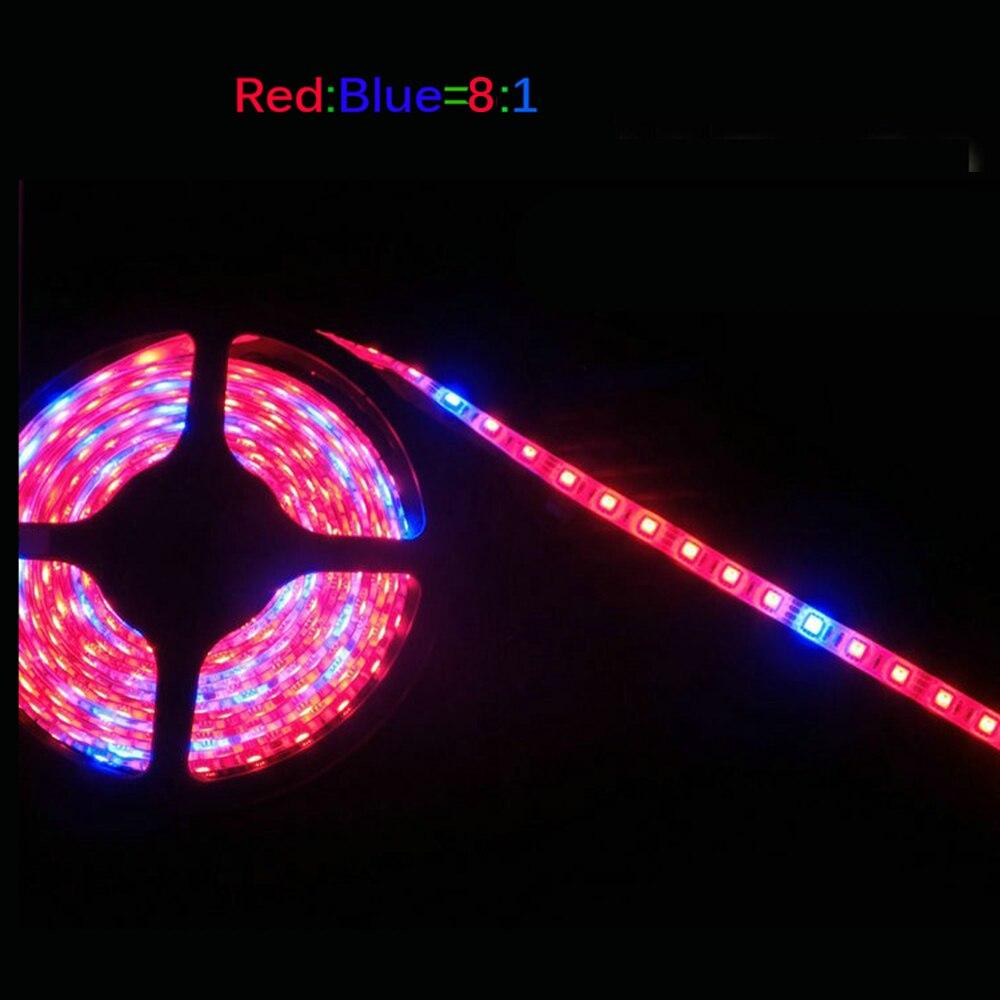 LED-växtväxelljus 5050 LED-remsa DC12V Rödblå 3: 1, 4: 1, 5: 1, - Professionell belysning - Foto 4