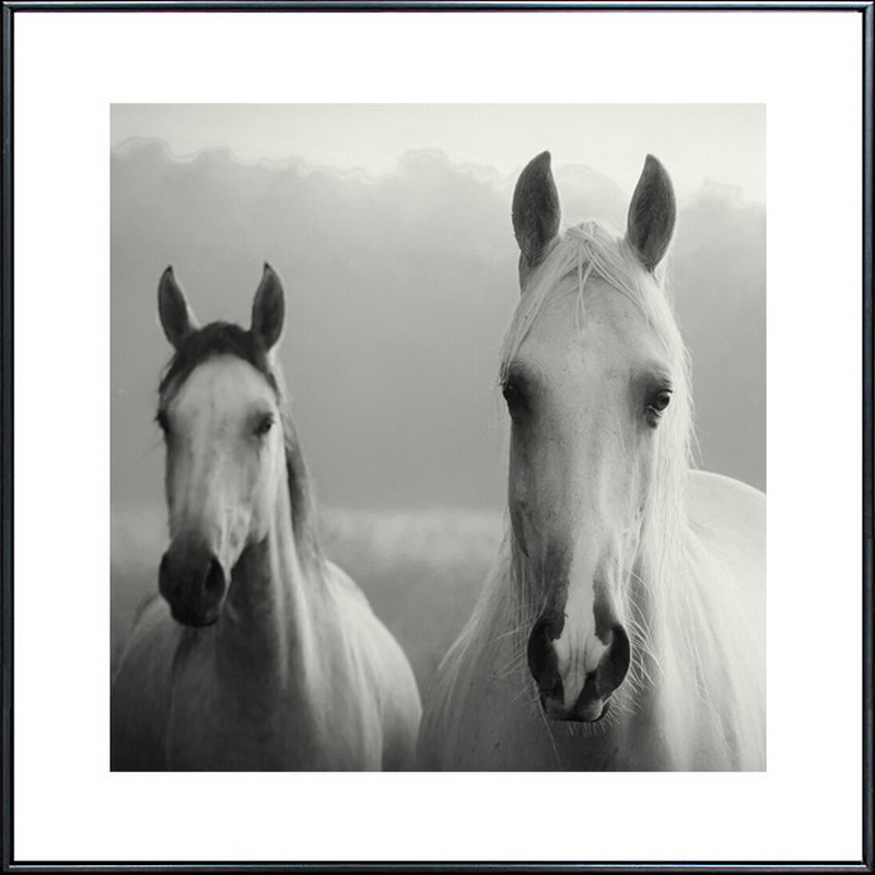Holland Leinwand Malerei moderne Ölgemälde Tier Pferd Kopf - Wohnkultur - Foto 3