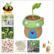 10 pcs Magic Growing Message Beans Bonsais, Perennial Indoor English Magic Bean Potted Green Office Home Climbing Potted Plants