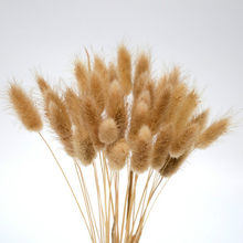 20 stems Dried Flower Bunny Tail Natural Plants Floral Rabbit Grass Bouquet Home Decoration Accessories Photography Props Flores(China)
