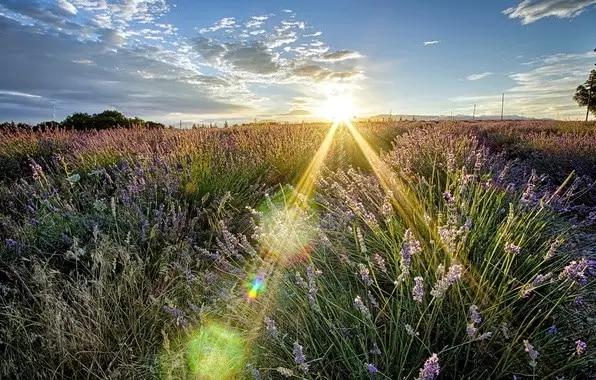 活着的每一天都应该是阳光的
