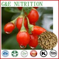 Natural Extratos de Frutas Wolfberry Goji Cápsula 500 mg x 300 pcs