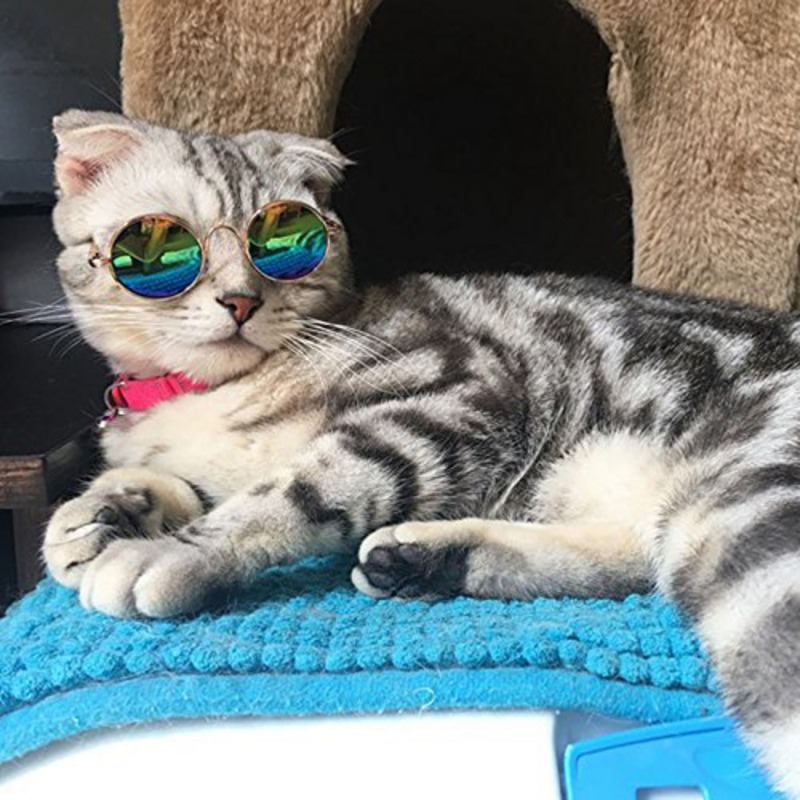 Pet Glasses Fashion Dog Cats Playing Cool Sunglasses Metal Frame Is Round Sun-protection Against Wear Photo Props Decor