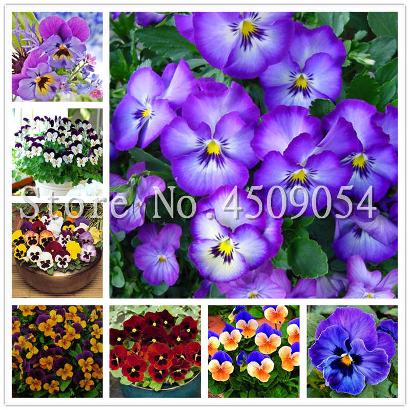 Big promotion! 100 pcs/bag Bonsai pansy flores Wavy Pansy (Viola tricolor) plantas Bonsai Flower Light Up Your Home Garden