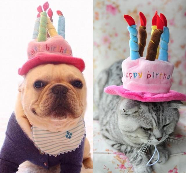 Haustier Katze Geburtstag Hut Hund Kappe Mit Kuchen Kerzen Design
