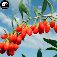 Buy Real Red Goji Berry Tree Seeds 300pcs Plant Chinese Ningxia Wolfberry Grow Gouji Berries