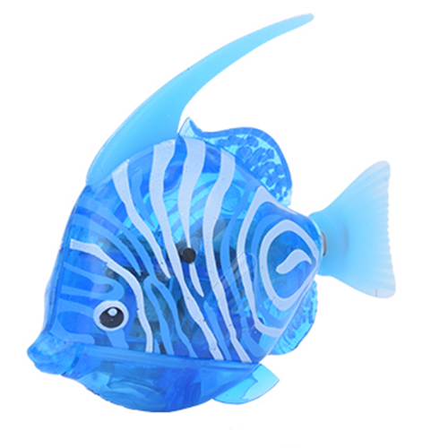 Angelfish Light Blue