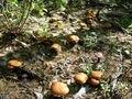 Cogumelos Secos fungo a selvageria no nordeste hazel cogumelo china saúde alimentar 200g