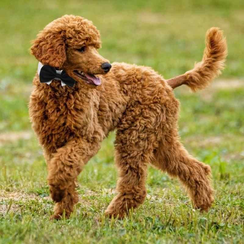 Hond Kat Pet Tie Puppy Speelgoed Strikje Stropdas Kleding Britse Zwarte Kitten Tie Knappe Hond Puppy Stropdas Voor Pet festival Decor