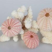 Free Shipping(10pcs/lot)Natural Small Pink Sea Urchin Natural Shell Conch Beach Wedding Decoration Coastal Home Decoration