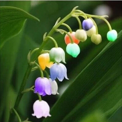 Lily of the Valley Flower Seeds Bell Orchid Seeds Rich