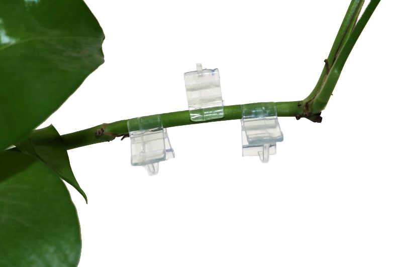 تطعيم مقاطع الزراعة الدفيئة زهرة النبات كرمة الشتلات المطعمة فروع كليب موصل السحابات البلاستيك 50 قطعة