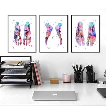 Набор с принтом ног, скелет, акварельное искусство, холст, постер, картина для ног, кости, анатомия, медицина, настенная печать, клиника, медиц...
