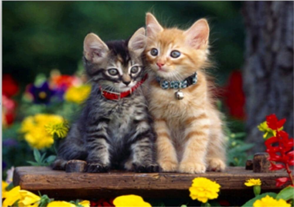 Обои Кошки Бесплатно