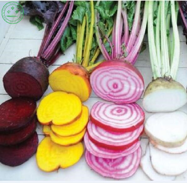 Aliexpresscom Buy Mix Beetroot Seed Beta vulgaris Vegetable