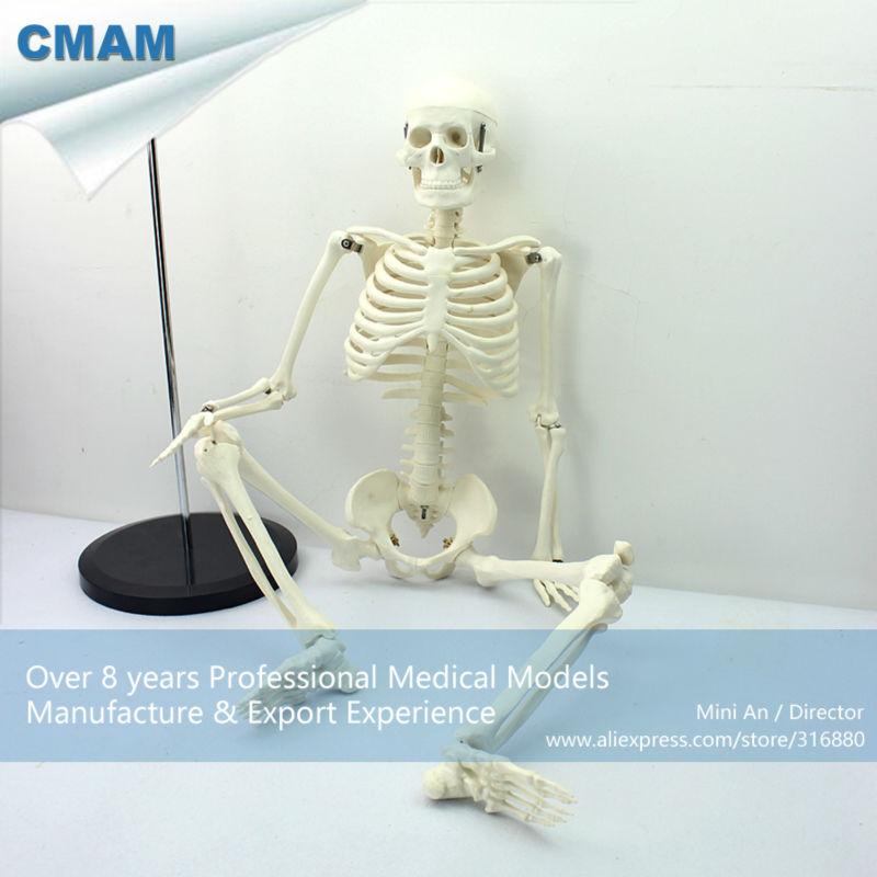 12366 CMAM-SKELETON06 Classic Medical Anatomy Standard 85cm Human Skeleton Model Manikin cmam viscera01 human anatomy stomach associated of the upper abdomen model in 6 parts