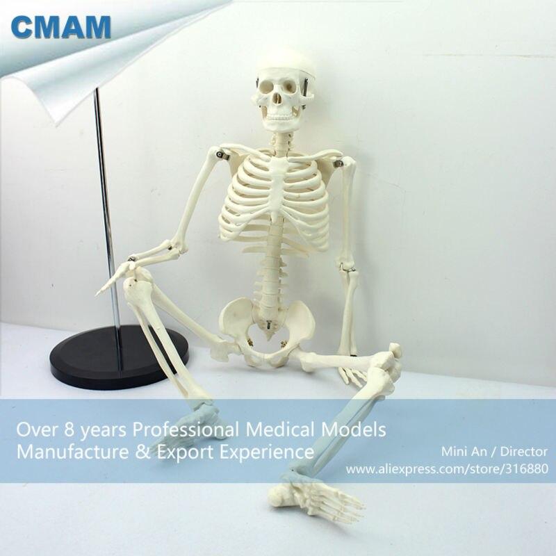 12366 CMAM-SKELETON06 clásico anatomía médica estándar 85 cm esqueleto humano modelo maniquí