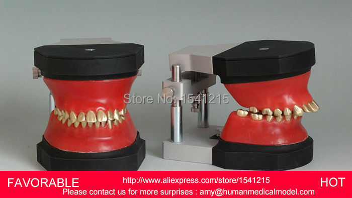 DENTAL TOOTH TEACHING MODEL ORAL MEDICINE PRACTICE TEACHING MODEL,TOOTH ,ORTHODONTIC TOOTH MODEL OPERATION-GASEN-DEN0019 dental removable dental model dental tooth arrangement practice model with screw teaching simulation model oral materials