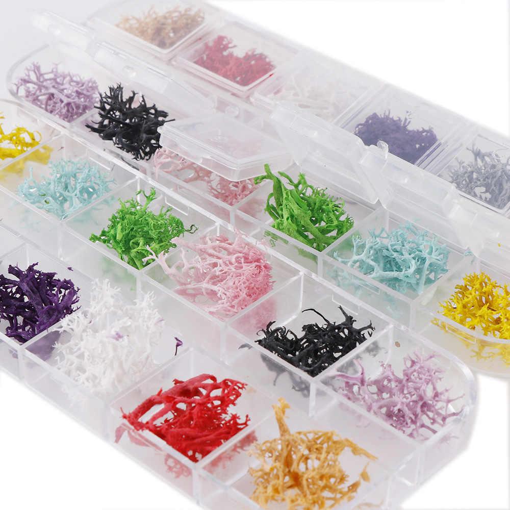 12 Colores/caja Coral Real flores secas plantas secas para Resina epoxi colgante collar joyería hacer artesanía DIY accesorios de uñas
