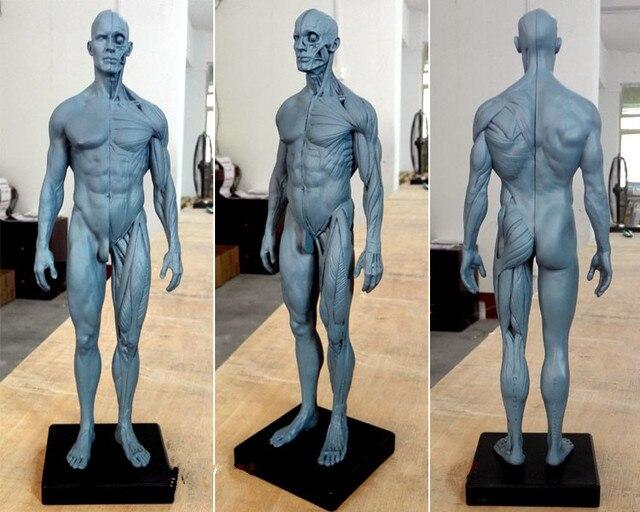 30 cm resina para mujer humana anatómico anatomía escultura cráneo ...