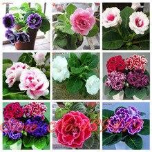 9 Colors Gloxinia Seeds Perennial Flowering Plants Sinningia Speciosa Bonsai Balcony Flower – 100 PCS
