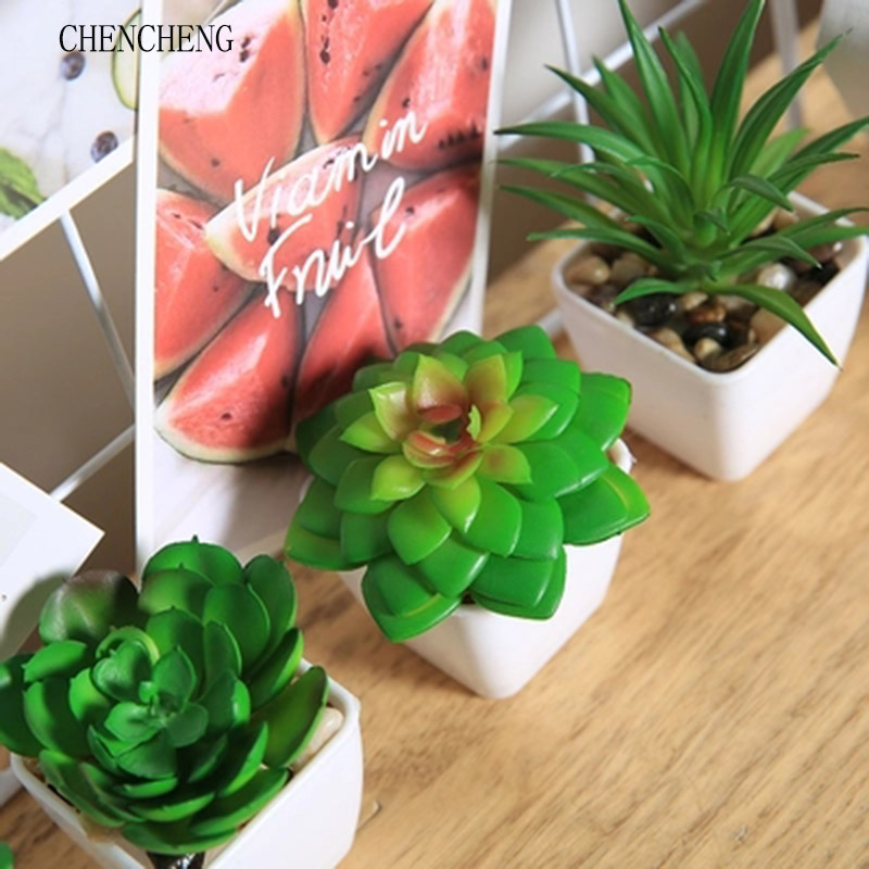 1 Unidades Venta Caliente Mezclado Astrophytum Cactus Flores Plantas
