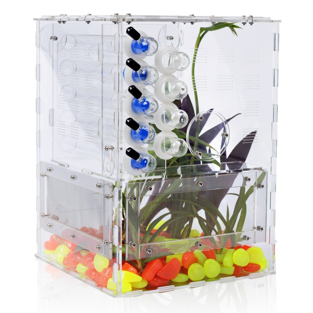DIY Acrylic Big Ant Farm with Garden Plant Decoration Large Ants House Ant Nest Test Tube