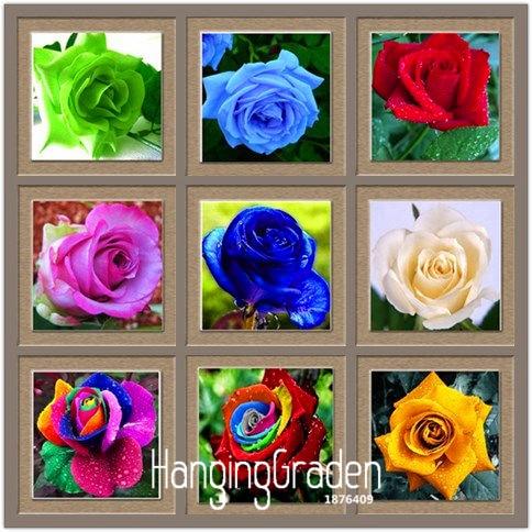Best-Selling!Flower pots planters ,20 Kinds,50 PCS/Pack, Rainbow rose seeds Beautiful rose seed Bonsai plants Seeds,#YOEXYE