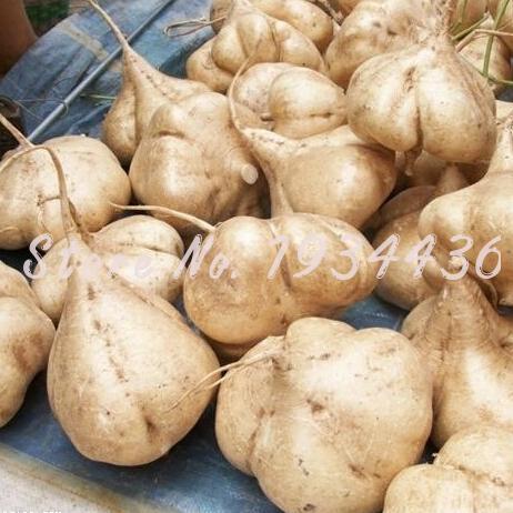 Jicama 6 pçs/saco Batata Doce/Yam Feijão Jardim Frutas E Legumes Bonsai Pot Frete Grátis Pátio Planta de Rápido Crescimento