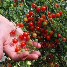 200 tomato seeds Rare mini Climbing Tomato seeds, Cherry Tomatoes - sweet 200, Mini Bonsai Plant Organic Food