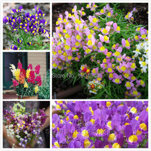 400 Linaria maroccana Seeds, Snapdragons mix color reseed itself  Easy to grow, beautiful home garden flower