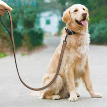 Leather dog training leash for all day activities