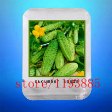 cucumber seeds 100 mini japan cucumber professional makeup Seeds VEGETABLE for home garden planting(China)