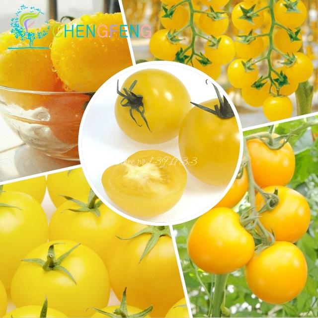 Rare Yellow Pearl Tomato bonsai 30pcs/bag Dwarf Tomatoes Cherry Mini Tomato Bonsai bonsai Vegetable for Garden Plant Free Shippi